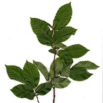 lisce-breze