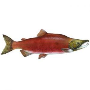morska riba