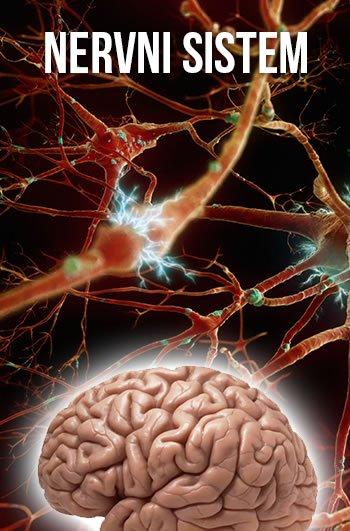 nervni-sistem-lupus